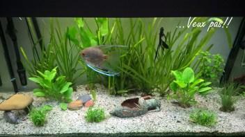 aquarium tropical 200l