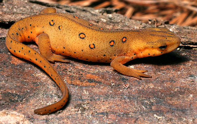 This is an eft.