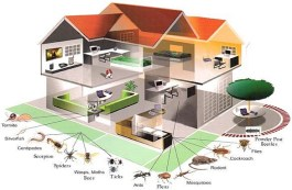 home pest control pic