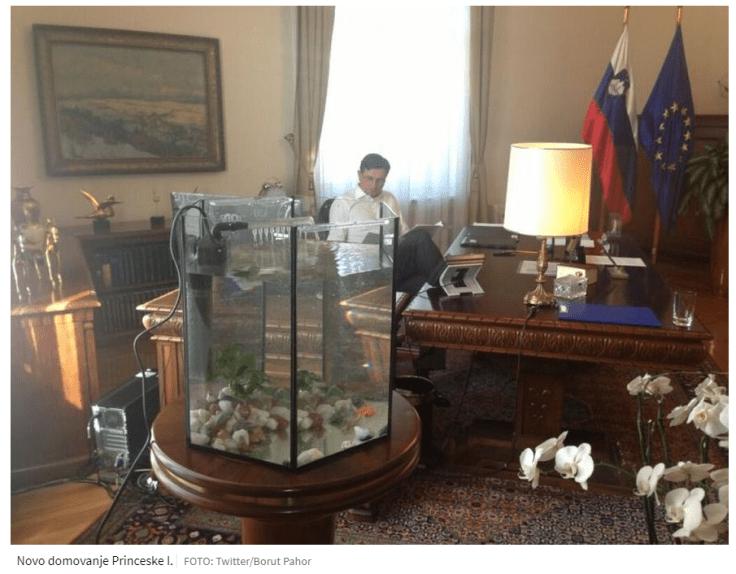 Pahor ribica princeska