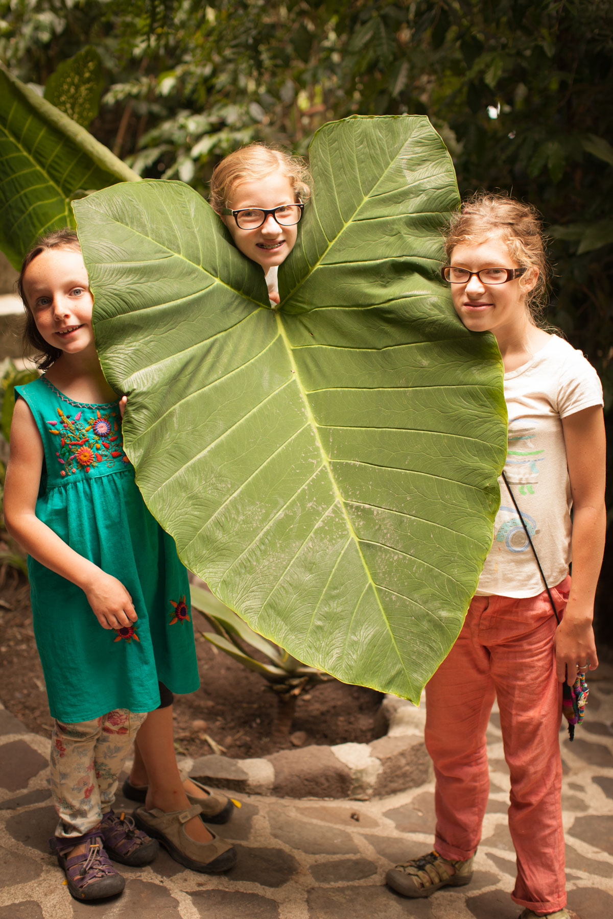 Large banana leaf - Jaibalito, Guatemala - Vezzani Photography