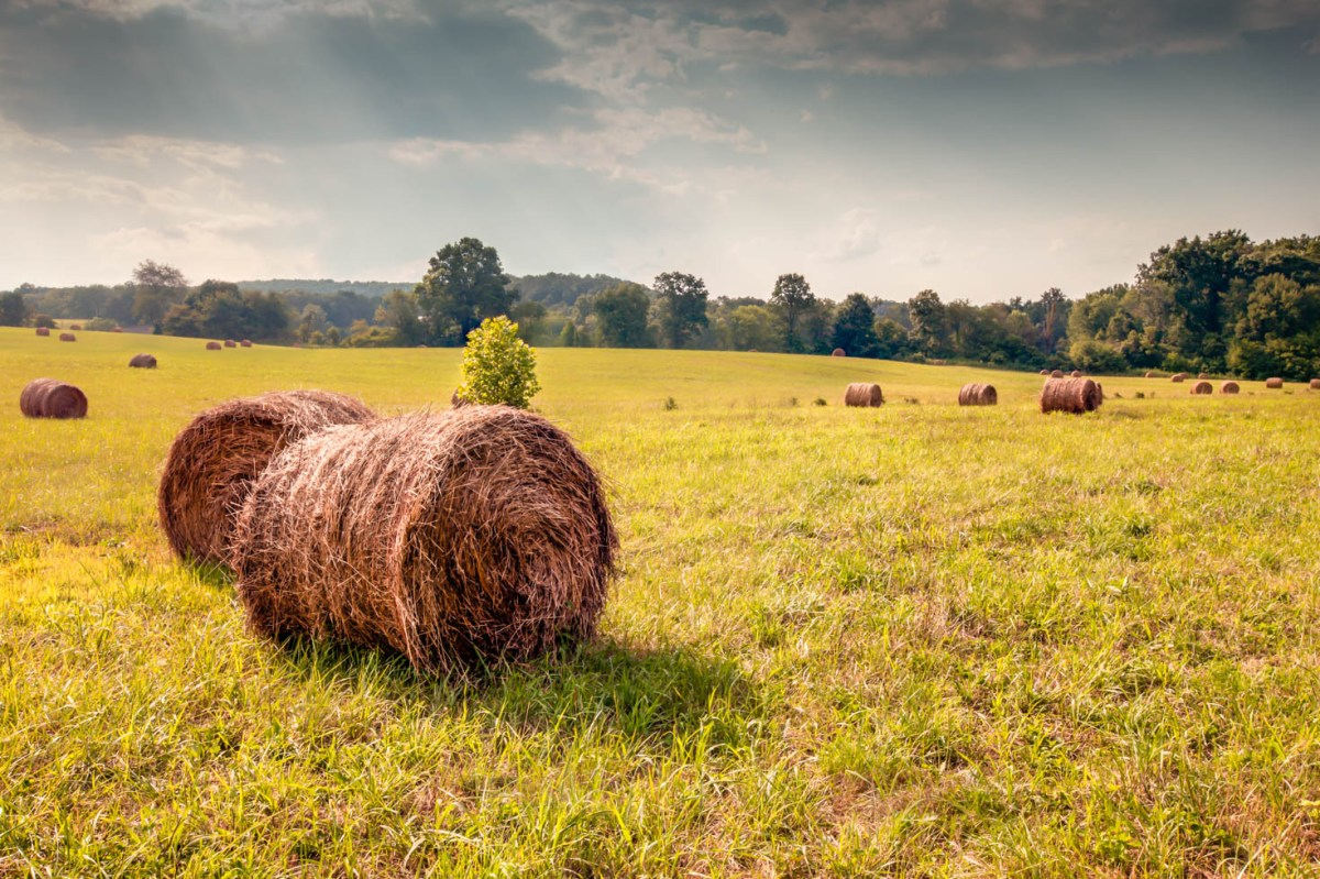 Hay bale on picturesque farm Vezzani Photography