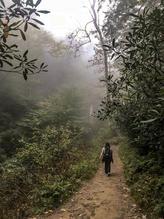 Trilium Gap Trail on the way to Grotto Falls off of the Roaring Fork Motor Nature Trail at Great Smoky Mountains National Park #vezzaniphotography