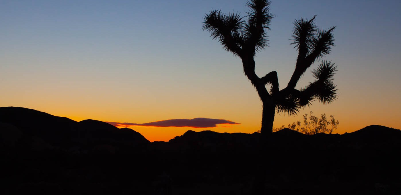 How the Federal Government Shutdown Affected Joshua Tree