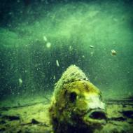 WLT SK Süßwasserbiologie Sinninger See