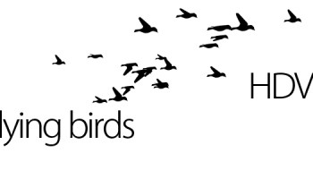 FLOCKING BIRD GENERATOR - AFTER EFFECTS PROJECT (VIDEOHIVE