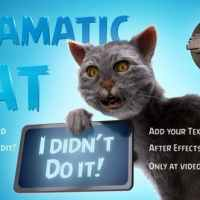 VIDEOHIVE FUNNY DRAMATIC CAT