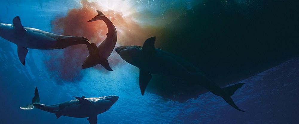 Shark! The Art of the CG Predator - VFX Voice MagazineVFX