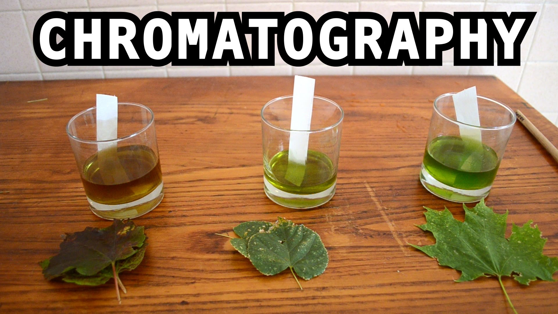 The Leaf Color Chromatography Experiment