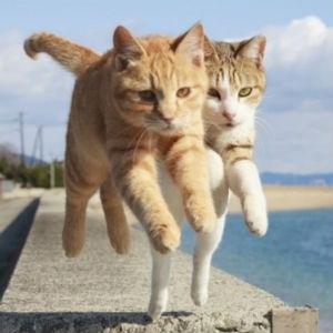 地獄の沙汰も猫次第♪社畜を捨てて私も一緒に跳んで逝きたいぃぃ