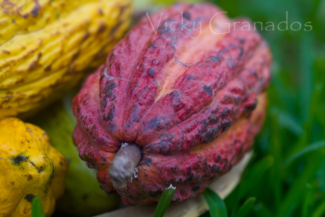 Los grandes cacaos... (1/2)