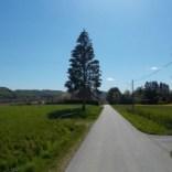 Etappe5(8 Tag)Strecke-Neudau–Fürstenfeld-21