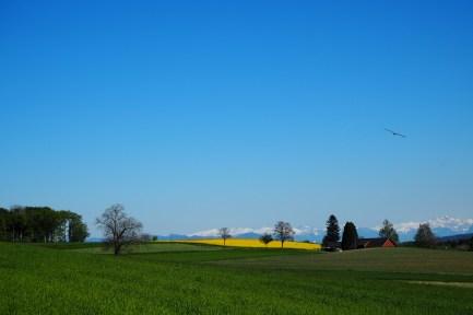 Landscape Chatzerüti