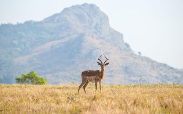 suazilandia-amanda-viaja