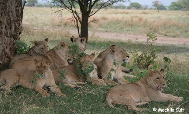 safari9 (13)