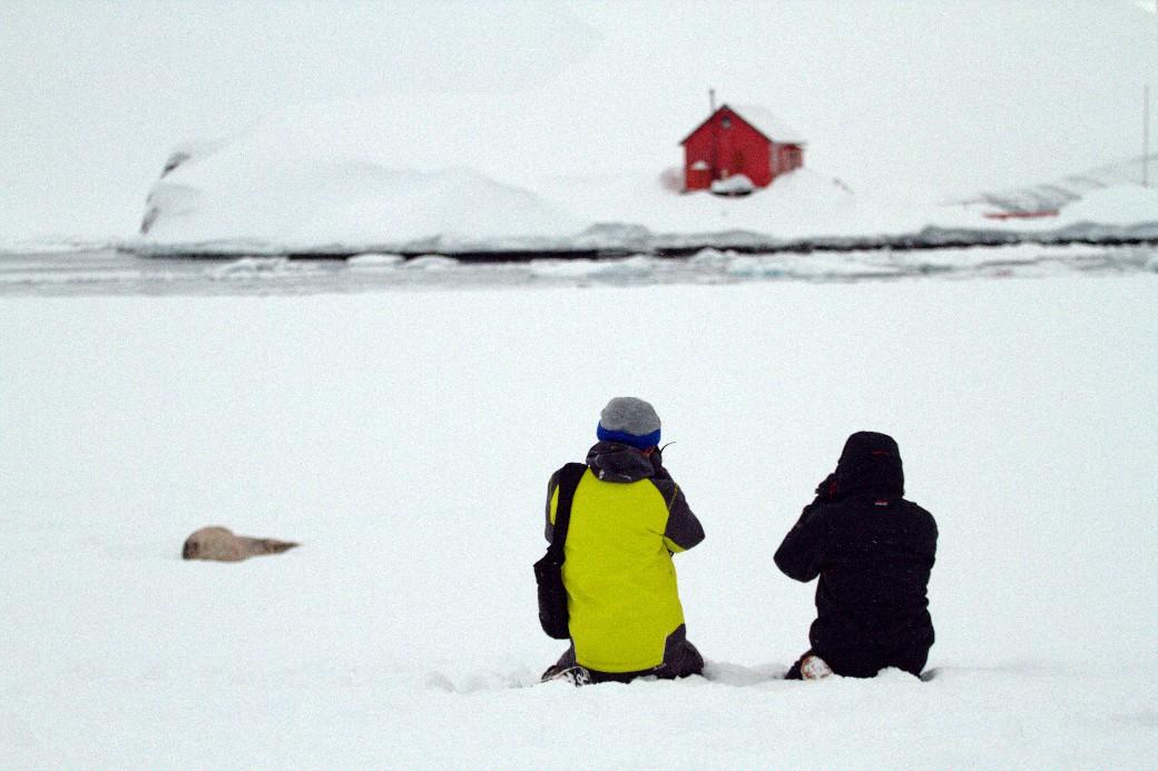 Animais selvagens, como a foca-de-weddell (na foto, à esq.) e bases científicas podem ser vistas durante acampamento na Antártica