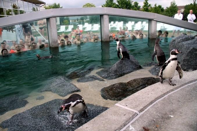 Spreewelten Bad, em Lübbenau (foto: Eduardo Vessoni)