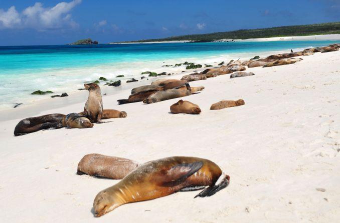 Galápagos (foto: Divulgação)