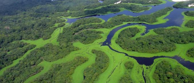 Parque Ncional de Anavilhanas (foto: Lincoln Barbosa/Commons Wikimedia.org)