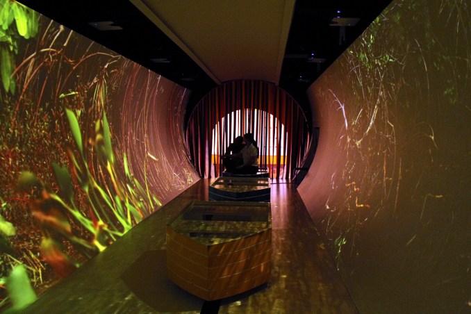 Túnel com projeções de ecossistemas de Sergipe (foto: Eduardo Vessoni)