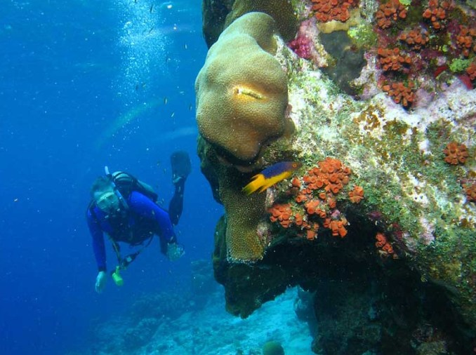 Mergulho em Bonaire, no Caribe (foto: Dan Hershman/Flickr-Creative Commons)