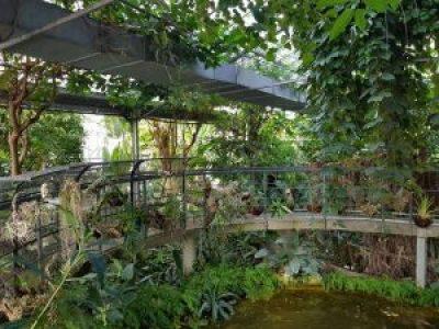 Serra tropicale dell'orto botanico