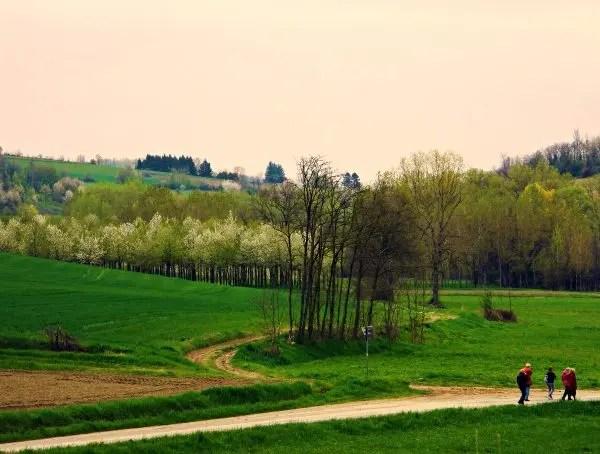 Colline intorno a Montiglio Monferrato.