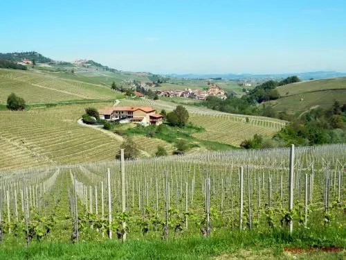 Panorama sulle Langhe.