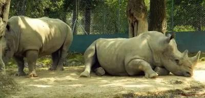 Rinoceronte, Safari Park di Pombia.