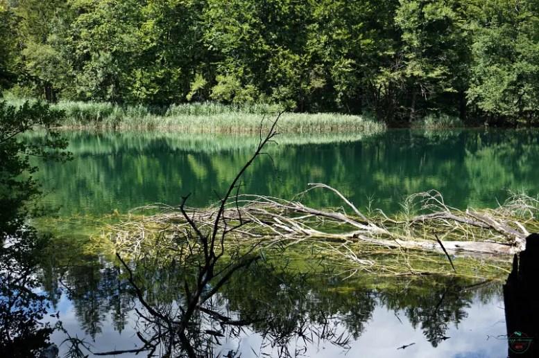 scorcio sull'acqua cristallina e verde dei Laghi di Plitvice.
