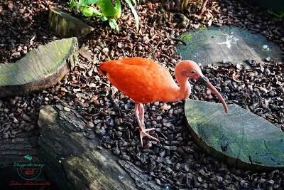 visita all'acquario di genova biosfera ibis scarlatto