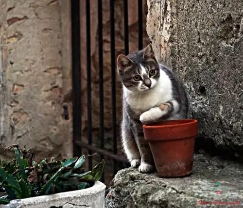 cosa vedere a Bussana Vecchia: i gatti silenziosi e furtivi si aggirano per il borgo dell'entroterra ligure.