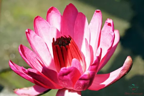All'interno dell'orto botanico di Padova si incontrano fiori bellissimi.