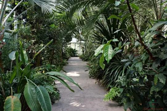 All'interno del Giardino delle Biodiversità dell'Orto Botanico di Padova si cammina tra piante provenienti da tutto il mondo.