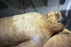 Se vuoi sapere cosa fare a torino, la prima cosa è assolutamente quella di visitare il museo egizio per vedere da vicino le mummie.