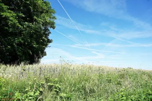 Il paesaggio del Pianalto di Poirino è caratterizzato da campi di grano.