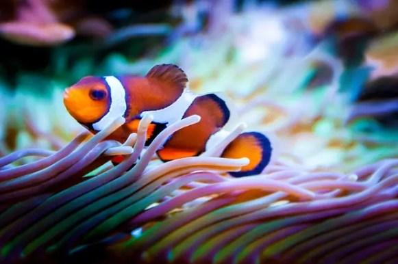 Un pesce pagliaccio simile a Nemo, protagonista di uno dei cartoni animati sul viaggio migliori di sempre.
