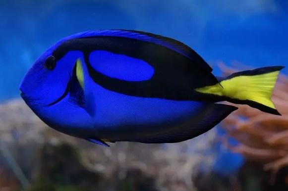 Un pesce chirurgo simile a Dory che accompagna il papà di Nemo in questo film che è uno dei migliori cartoni animati sul viaggio.