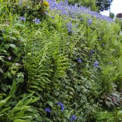 Dettaglio dei muri vegetali - Cornovaglia maggio 2014