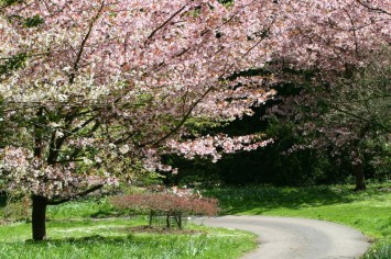 Blossom trees at Batsford Arboretum
