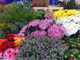 g-mercato-fiori