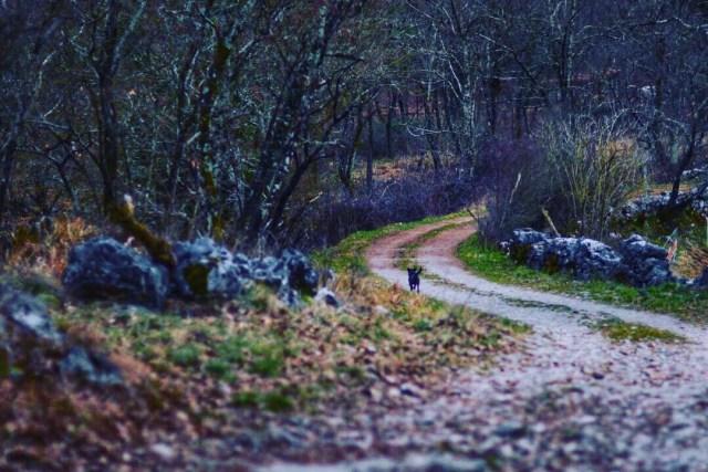 Slovenia: Diario di una viaggiatrice – non è mai tardi per cambiare