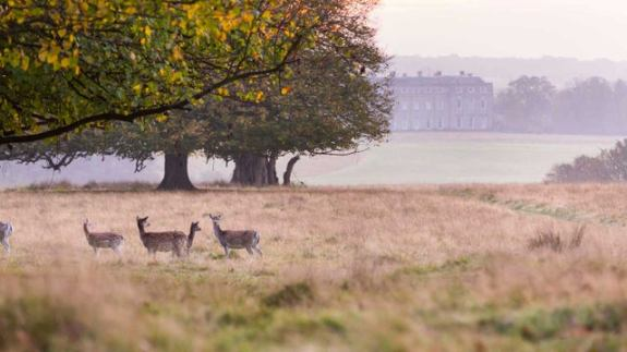 Chris_Lacey_Petworth_Park_Deer_WR-2