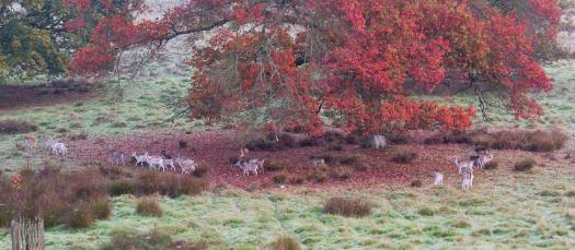 petworth autumn leaves deer