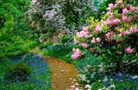Arduaine Garden in the spring. Oban, Argyll.