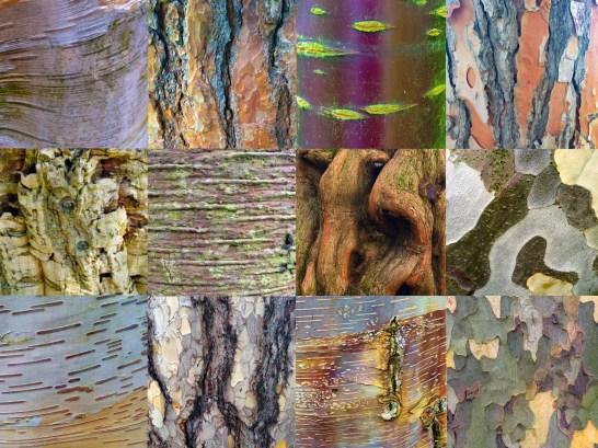 collage_corteccie