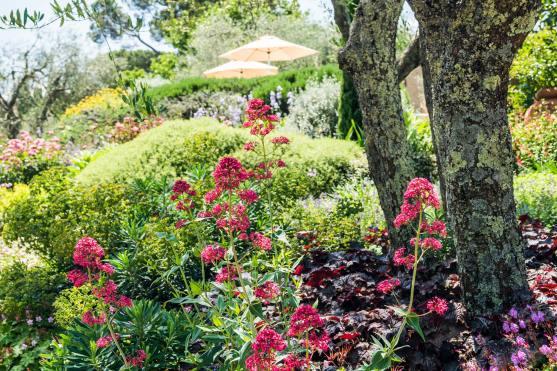 QUADRATO-Il-giardino-delle-grigie