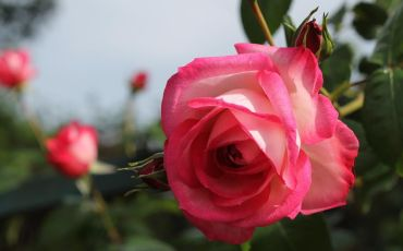 Roma e il Giardino delle Rose