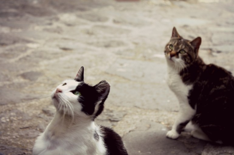 Civita di Bagnoregio - Gatti