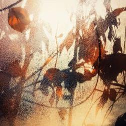 E' tardi, come sempre. Devo correre giù per le scale e precipitarmi a prendere la metro per andare in ufficio... no, aspetta. Torna indietro. La finestra del condominio è illuminata da un raggio di sole e quelle foglie, quei colori, sono splendidi. Li immortalo... è autunno.